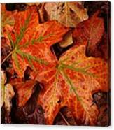 Complementary Contrast Leaves Canvas Print