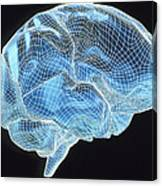 Computer Artwork Of A Wire-frame Model Of A Brain Canvas Print