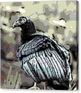 Condor Profile Canvas Print