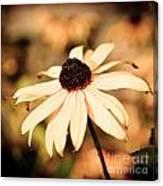 Cone Flower Grunge Canvas Print