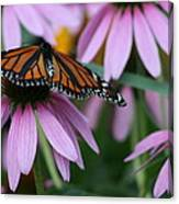 Cone Flowers And Monarch Butterfly Canvas Print