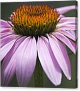 Coneflower Visitor Canvas Print