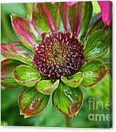 Confused Cone Flower Canvas Print