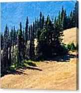 Conifer Clusters Canvas Print