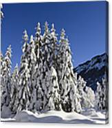Coniferous Forest In Winter Canvas Print