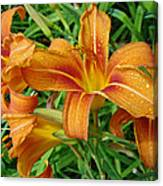 Consider The Lilies Of  The Field - Hemerocallis Fulva Canvas Print