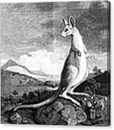 Cook: Kangaroo, 1773 Canvas Print