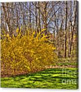 Cool Day Of Spring Canvas Print