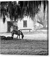 Coosaw - Grazing Free Canvas Print