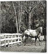 Coosaw - Outside The Fence Black And Wite Canvas Print