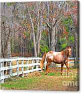 Coosaw - Outside The Fence Canvas Print