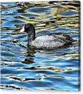 Coot In The Lake Canvas Print