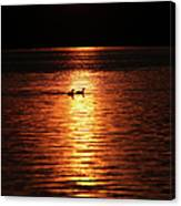 Coots In The Sunset Canvas Print
