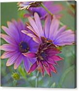 Copper Daisies 1 Canvas Print
