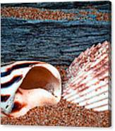 Coquina Shell - 2 Canvas Print