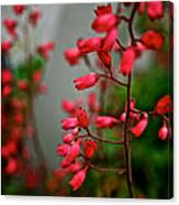 Coral Bells Canvas Print