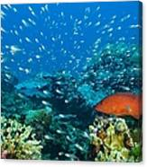 Coral Reef In Thailand Canvas Print