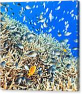 Coral Reef Panorama Canvas Print