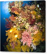 Coral Reef Seascape, Australia Canvas Print