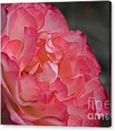 Coral Ruffles Canvas Print