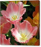 Coral Tulips Canvas Print