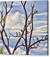 Corella Tree Canvas Print