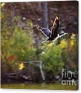 Cormorant Flight Series - 2 Canvas Print