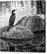 Cormorant On Rocks Canvas Print
