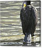 Cormorant Portrait In Shallow Water Canvas Print