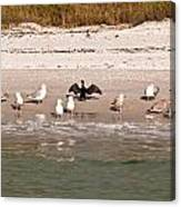 Cormorant Stands Out Canvas Print