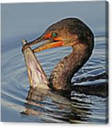 Cormorant With Large Fish Canvas Print