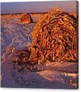 Corn Bales At Sunset, Dugald, Manitoba Canvas Print