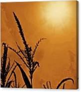 Corn Field Haze  Canvas Print