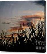 Corn Field With Orange Clouds Canvas Print