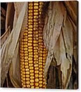 Corn Stalks Canvas Print