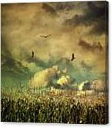 Cornfield In Summer With Dark Skies Canvas Print