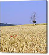 Cornfield With Poppies Canvas Print