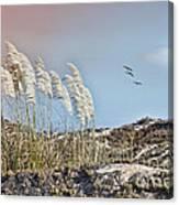 Coronado Island Pampas Grass Canvas Print