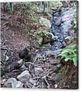Corte Madera Creek On Mt Tamalpais Canvas Print