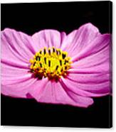 Cosmia Pink Flower Canvas Print