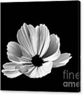 Cosmo Black And White Canvas Print