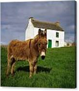 Cottage And Donkey, Tory Island Canvas Print
