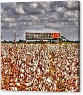 Cotton Field Canvas Print