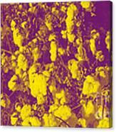 Cotton Golden Southwest Canvas Print