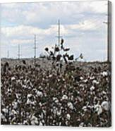 Cotton Ready For Harvest In Alabama Canvas Print