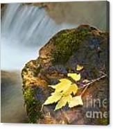 Cottonwood Cascade in Autumn Canvas Print