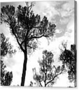 Cottonwood Silhouette Ser1 Canvas Print