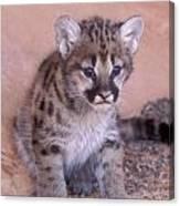 Cougar Kitten Canvas Print