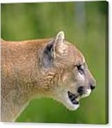 Cougar Profile Canvas Print