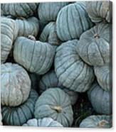 Counting Squash Canvas Print